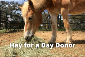 Hay for a Day Donor